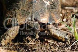 turtle eating bug