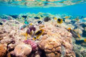 Tropical Coral Reef. Red sea