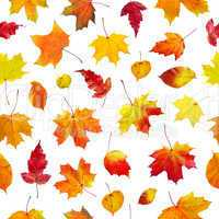 seamless  background autumn leaves