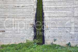 moss on concrete
