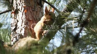 Squirrel 7