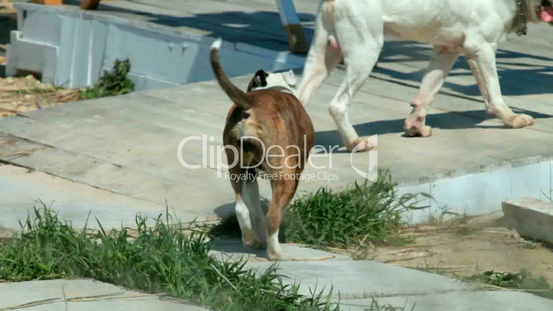 Dogs Mating Royalty-Free Video And Stock Footage-6997