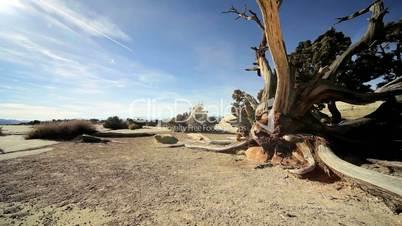 Petrified Tree in Desert Environment