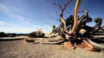 Drought Stricken Tree in Desert Landscape