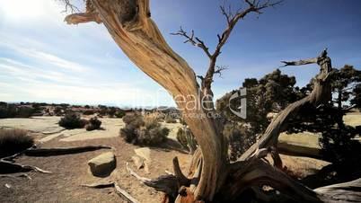Vegetation in Desert Environment