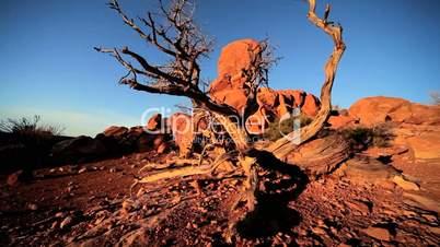 Balanced Rock & Dead Tree