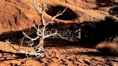 Petrified Tree in Barren Environmental Landscape