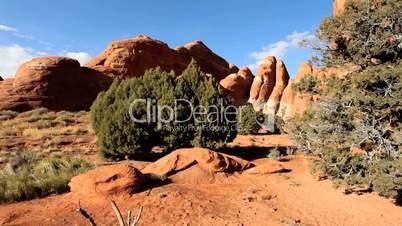 Desert Beauty in Arid Environment