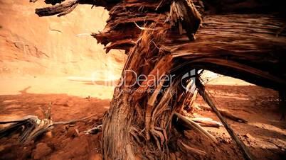 Petrification of Dead Tree in Desert Landscape