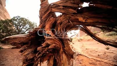 Drought Damage to Desert Vegetation