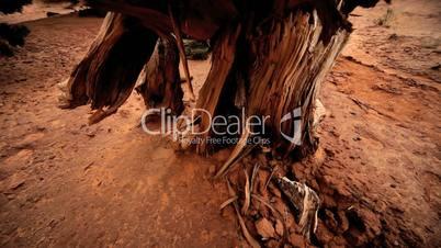 Environmental Rotting of Dead Tree