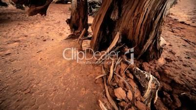 Environmental Damage of Tree Life