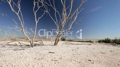 Bleached Tree Branches in Dry Lake Bed