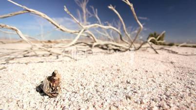 Dry Lake Environment
