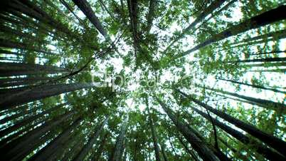 Low-Angle View of Canopy of Trees