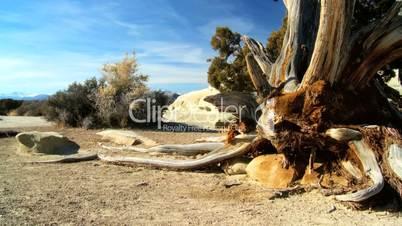Dead Tree in Desert Wilderness