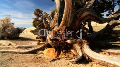 Scenic Beauty of a Dry Arid Landscape