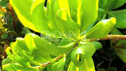 Tropical Leaves in Close-up