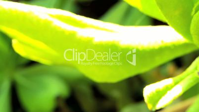Tropical Leaf in Extreme Close-up
