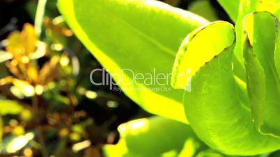 Close-up Detail on Lush Tropical Vegetation