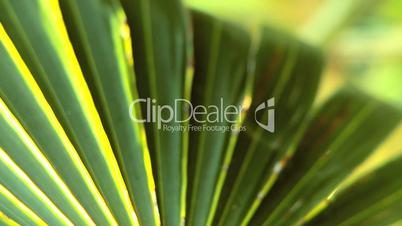 Extreme Close-up of Tropical Vegetation