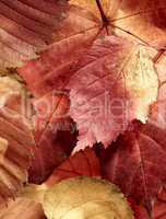 fallen autumn multi-coloured leaves