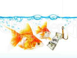Gold small fishes under water