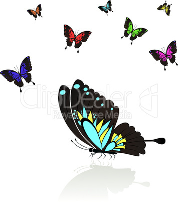 Collect of many colored Butterflies