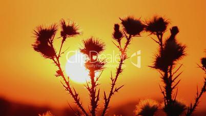 Prickly plant 2