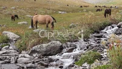 Horses 25