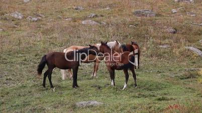 Horses 26