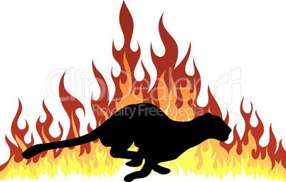 flame puma