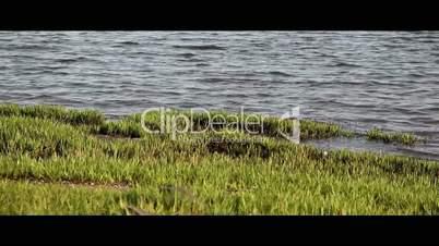 Grass near water