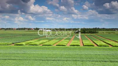 Agriculture landscape and cloudy sky