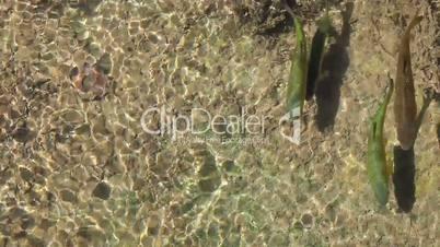 Fish swim  in clean water