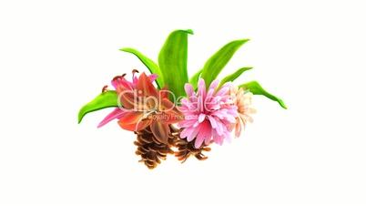 growing flowers with leafs and pine cones