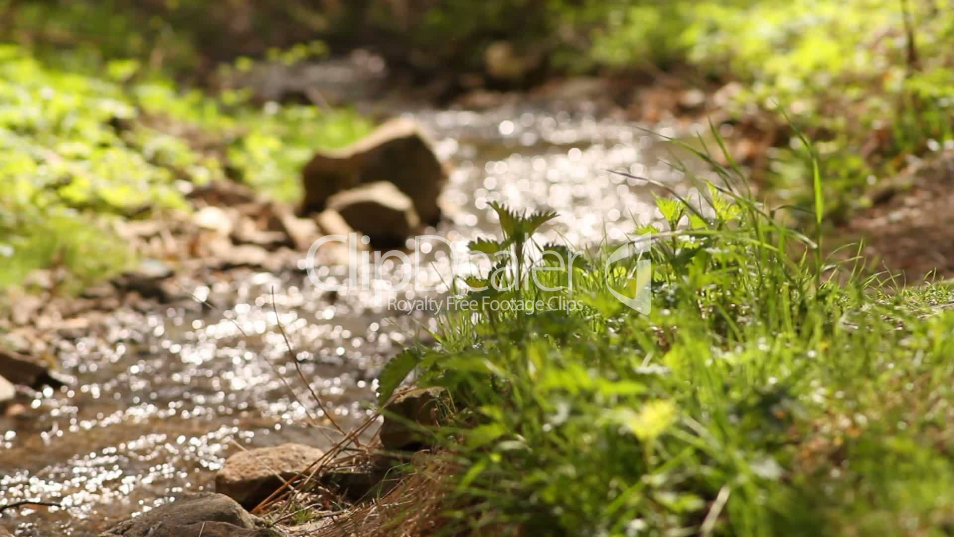 Creek Beautiful video pictures new photo