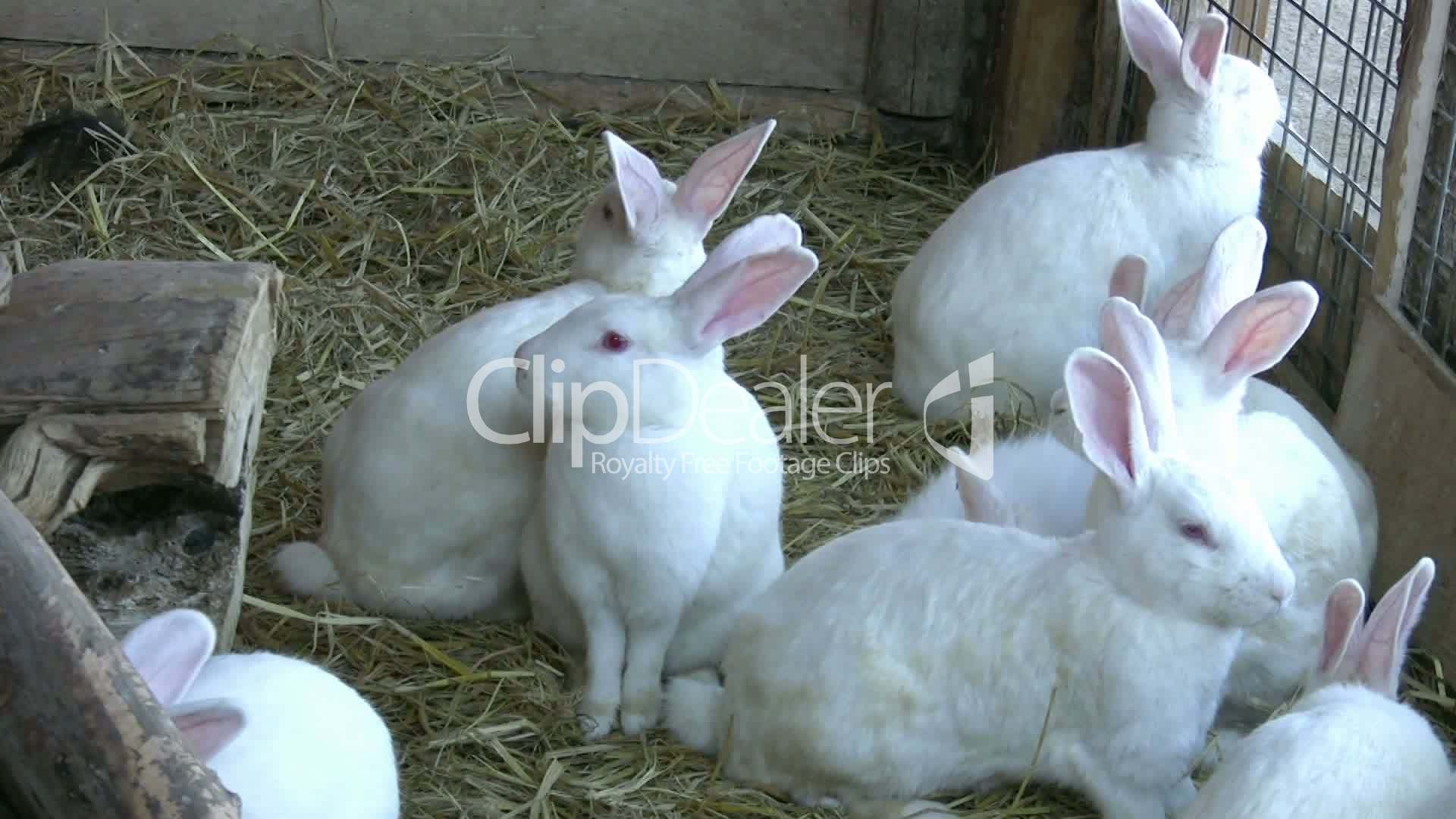 Terms Of Use >> White Rabbits: Royalty-free video and stock footage
