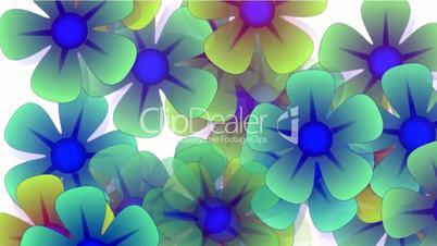 color wild flower flow background.Vegetables,bloom,Park,garden,