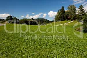 Lush Alpine meadow in bright summer day
