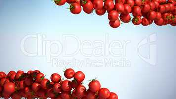 Two Tomatoe Cherry flows with space for text