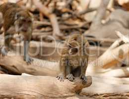 Monkey child sitting on fallen tree in zoo