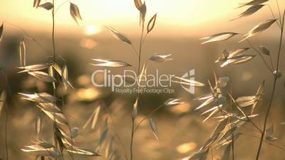 Grass and Summer