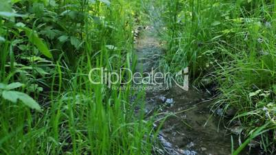 Small and fast creek in wood