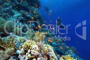 divers on a colourful reef