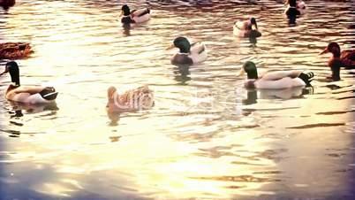 Fast motion ducks