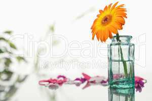 Orange gerbera in a glass flask with pink petals and leaves