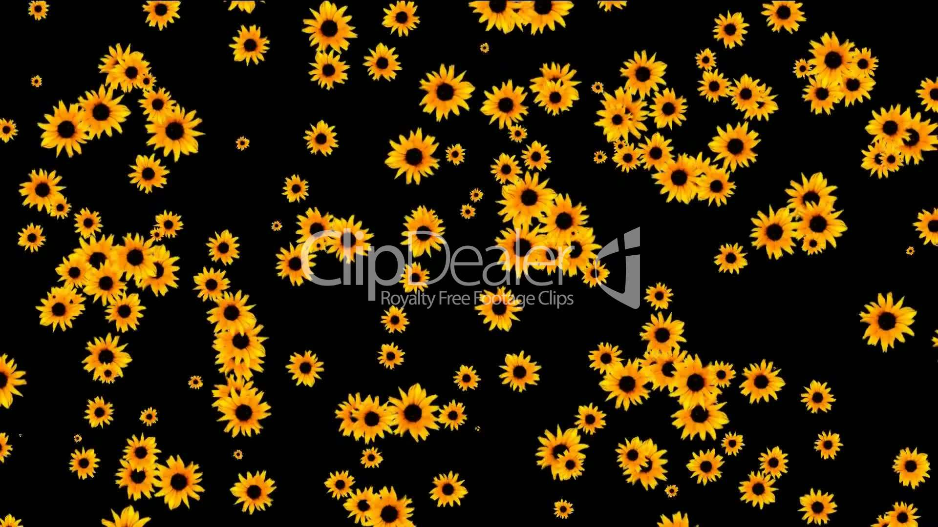 Sunflower As Wedding Backgrounddisco Neon Flower Pattern Royalty