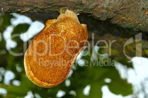 Mushroom-parasite (I)