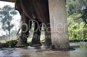 Chaned elephant